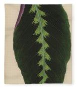 Maranta Warsewiczii Fleece Blanket