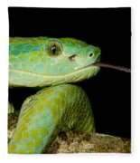 Marchs Palm Pitviper Fleece Blanket