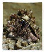 Marine Hermit Crab Fleece Blanket