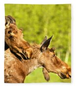 Maroon Bells Moose Pair Fleece Blanket