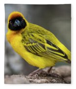 Masked Weaver Bird Facing Camera On Log Fleece Blanket