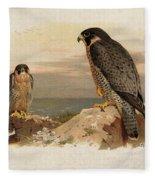 Mediterranean Peregrine By Thorburn Fleece Blanket