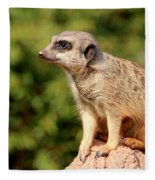 Meerkat 1 Fleece Blanket