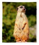 Meerkat 2 Fleece Blanket