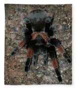 Mexican Redleg Tarantula Fleece Blanket