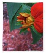 Mexican Sunflower In Mid Bloom Fleece Blanket