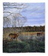 Take Out - Deer Fleece Blanket