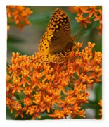 Milkweed And A Frittalary Fleece Blanket
