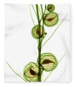 Milkweed, Gomphocarpus Physocarpus Fleece Blanket