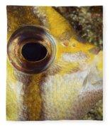 Milletseed Butterflyfish Fleece Blanket