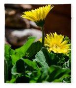 Miniature Yellow Gerbera Daisies Fleece Blanket