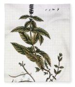 Mint Plant, 1735 Fleece Blanket