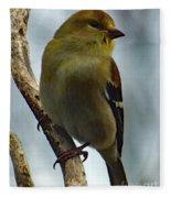 Molting Has Begun - American Goldfinch Fleece Blanket
