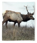 Molting Tomales Bay Elk Fleece Blanket