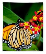Monarch Butterfly At Lunch With 2 Box Elder Bugs Fleece Blanket