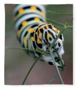 Monarch Caterpillar Clutches Dill In Pincers, Macro Fleece Blanket