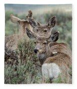 Montana Mule Deer On A Spring Night Fleece Blanket