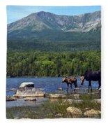 Moose Baxter State Park Maine 2 Fleece Blanket
