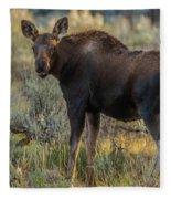 Moose Calf In Fall Colors Fleece Blanket