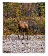 Moose Pawses In Mid-drink Fleece Blanket