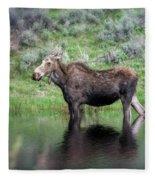 Moose Yellowstone Np_grk6918_05222018 Fleece Blanket