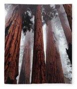 Morning Fog In Redwood Forest Fleece Blanket