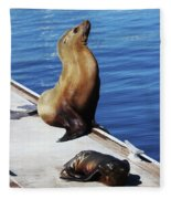 Mother And Baby Sea Lion At Oceanside  Fleece Blanket