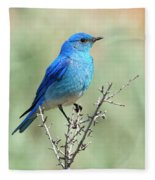 Mountain Bluebird Beauty Fleece Blanket