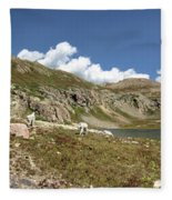 Mountain Goats At Columbine Lake - Weminuche Wilderness - Colorado Fleece Blanket