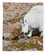 Mountain Goats On Mount Bierstadt In The Arapahoe National Fores Fleece Blanket