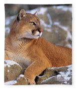 Mountain Lion On Snow-covered Rock Outcrop Fleece Blanket
