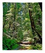 Muir Woods Study 22 Fleece Blanket