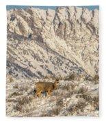 Mule Deer Buck In Winter Sun Fleece Blanket