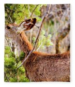 Mule Deer Foraging On Pine On A Colorado Spring Afternoon Fleece Blanket