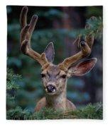 Mule Deer In Velvet 02 Fleece Blanket