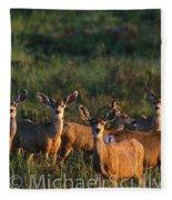 Mule Deer In Velvet 04 Fleece Blanket