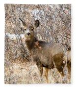 Mule Deer In Winter In The Pike National Forest Fleece Blanket