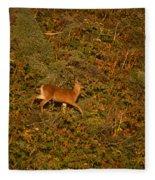 Mule Deer - Mattole Beach Fleece Blanket