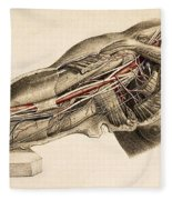 Muscles And Blood Vessels In Arm, 1851 Fleece Blanket