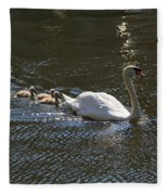 Mute Swan With Three Cygnets Following Fleece Blanket