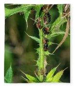 Mutualism - Ants And Treehoppers Fleece Blanket