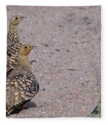Namaqua Sandgrouse Fleece Blanket