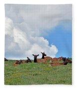 Nap Time 2 Fleece Blanket