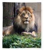 National Zoo - Luke - African Lion Fleece Blanket