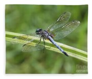 Nature Macro - Blue Dragonfly Fleece Blanket