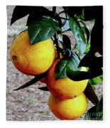 Naval Oranges On The Tree Fleece Blanket
