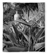 Nepenthe Bird Of Paradise B And W Fleece Blanket