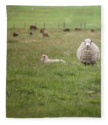 New Zealand Sheep Fleece Blanket