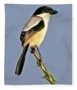 Philippine Falconet Fleece Blanket
