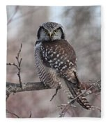 Northern Hawk Owl 9470 Fleece Blanket